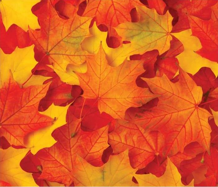fall leaves in red orange and yellow